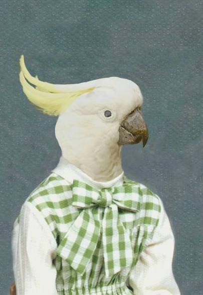 Rachelle the Cockatoo by Angela Rossi